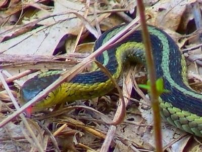 Small_snake_1